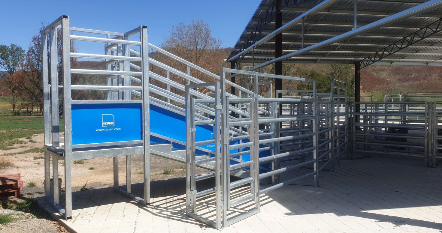 George's Concrete cattle loading ramp in steel cattle yards by te pari australia