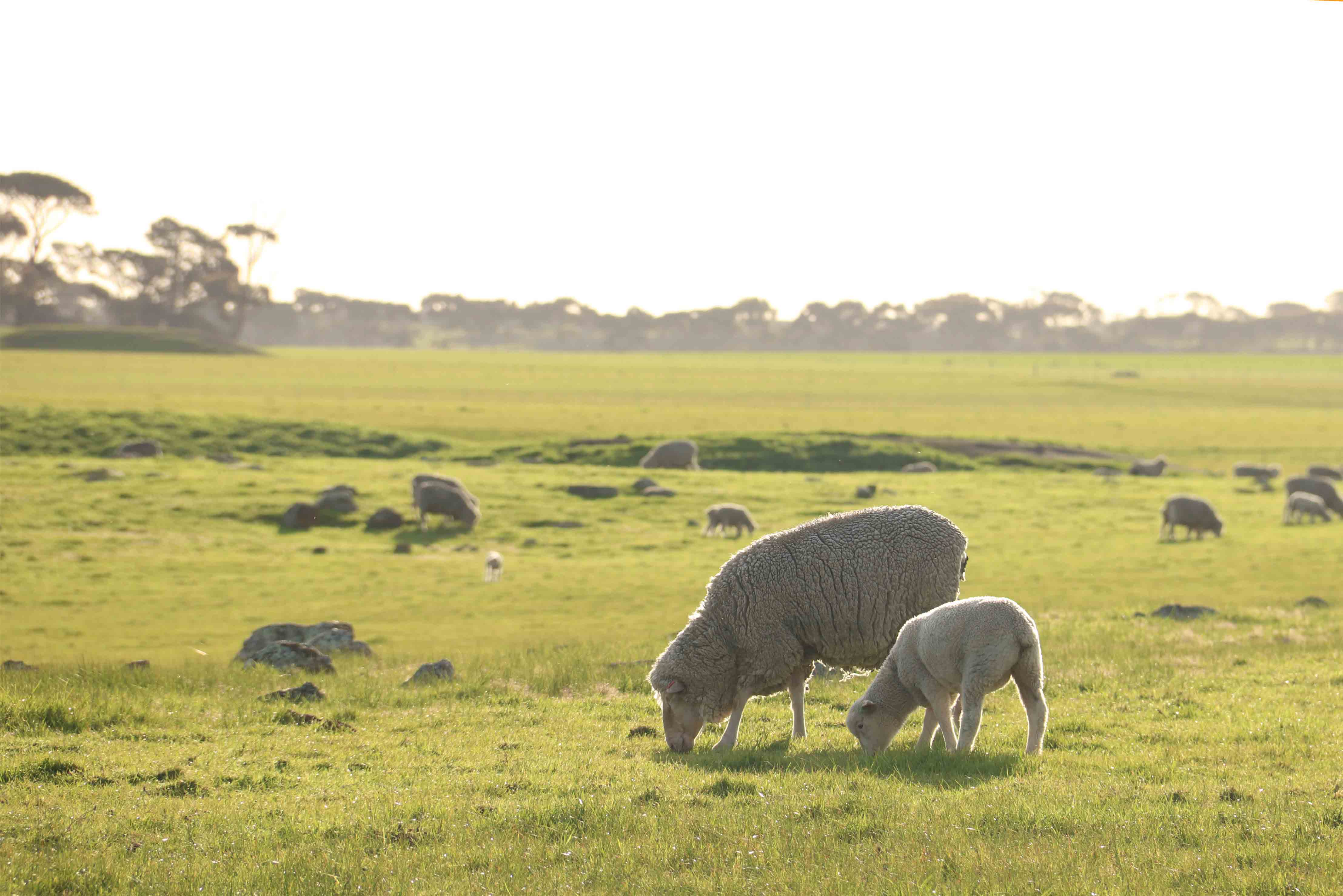 Getting your lambs off to a fast start