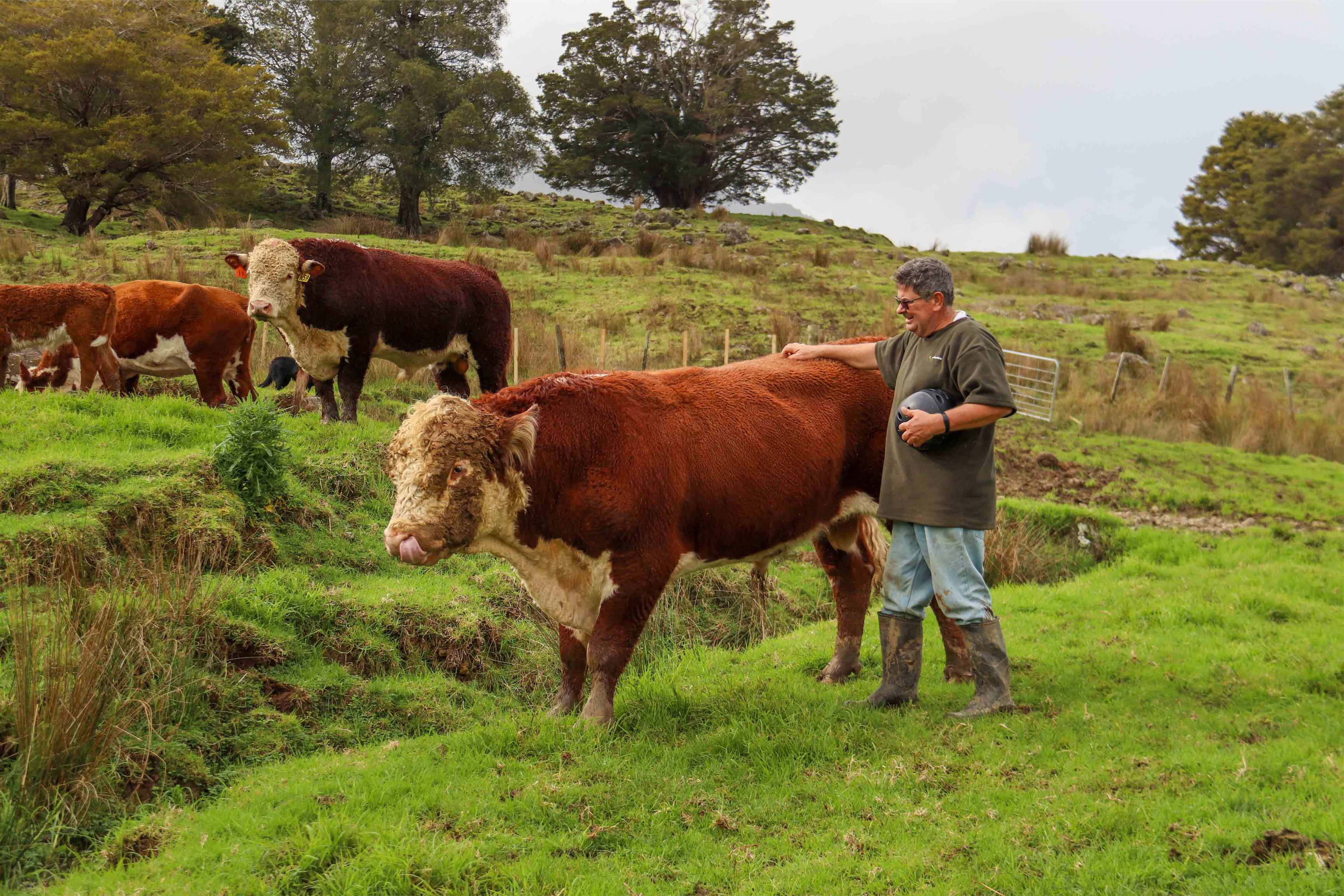 Confidence & Cattle Flow with Steel Cattle Yards