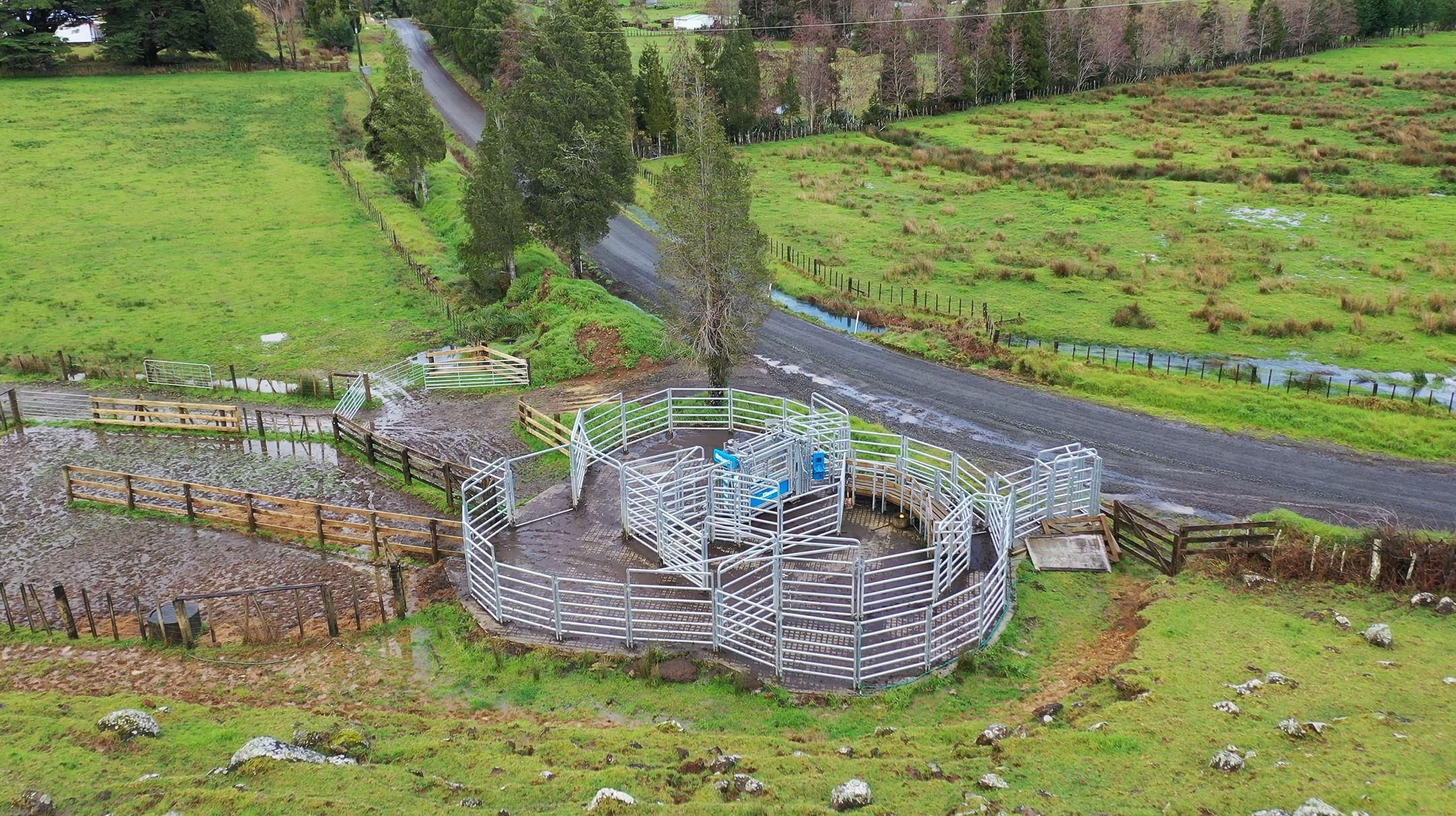 ian webb steel cattle yards nz, build plans hereford cattle breeders (2)
