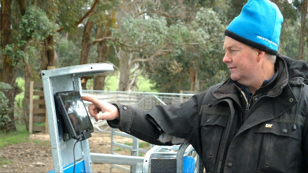 james almond working the t30 scale system for cattle & sheep (1)