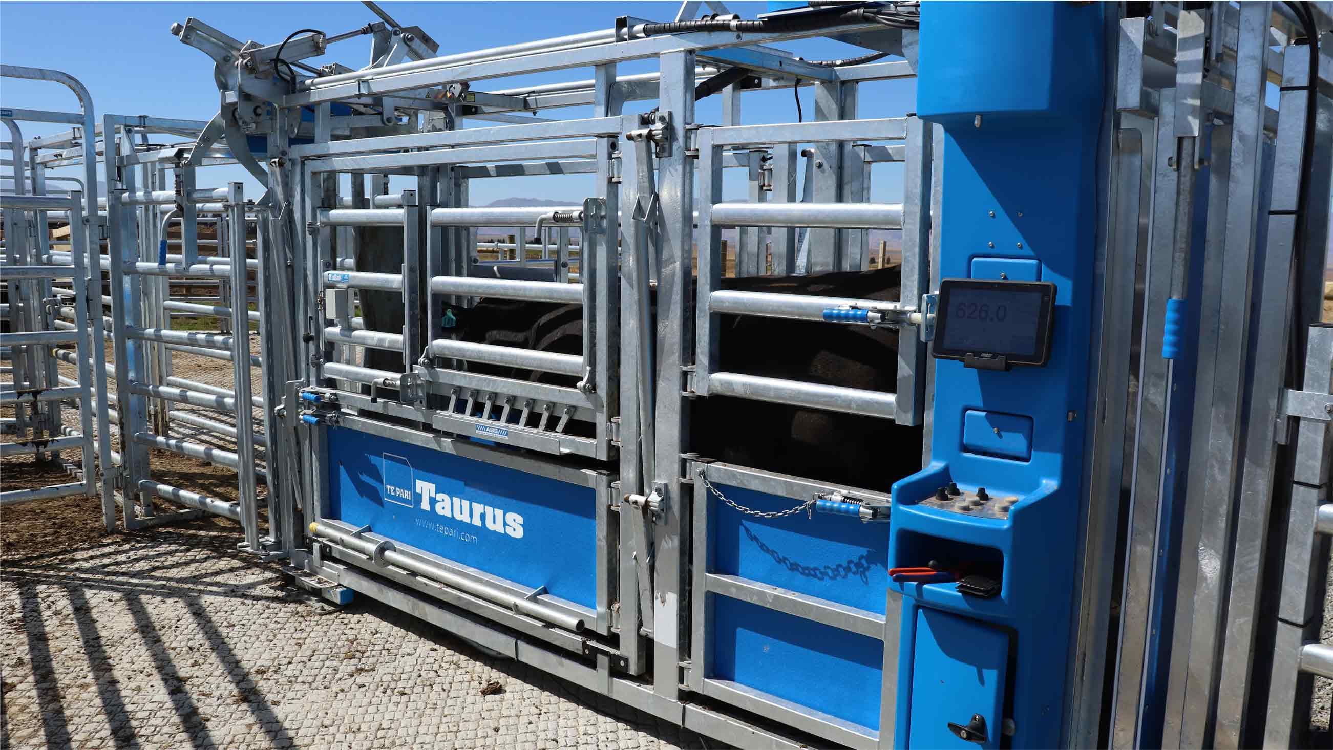 taurus hd3 auto drafting cattle crush thumbnail